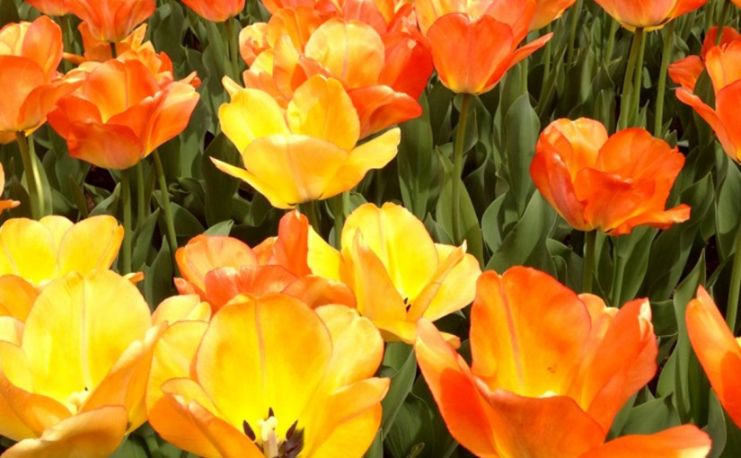 flower-thumb